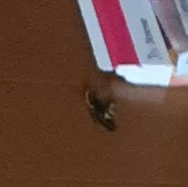 退治した雀蜂