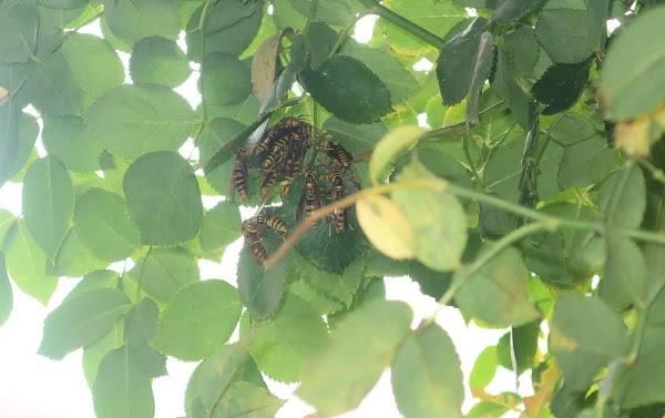 庭のスズメバチズーム