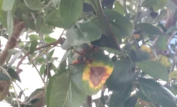 庭にいたスズメバチ